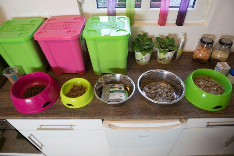 Zubereitung des Essens in der Hundeküche